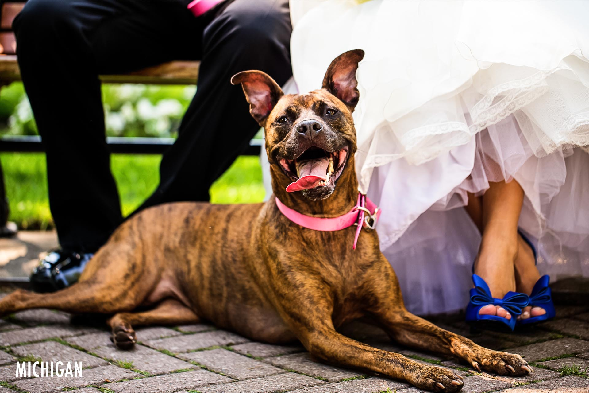 michigan-dog-wedding